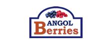 Angol Berries